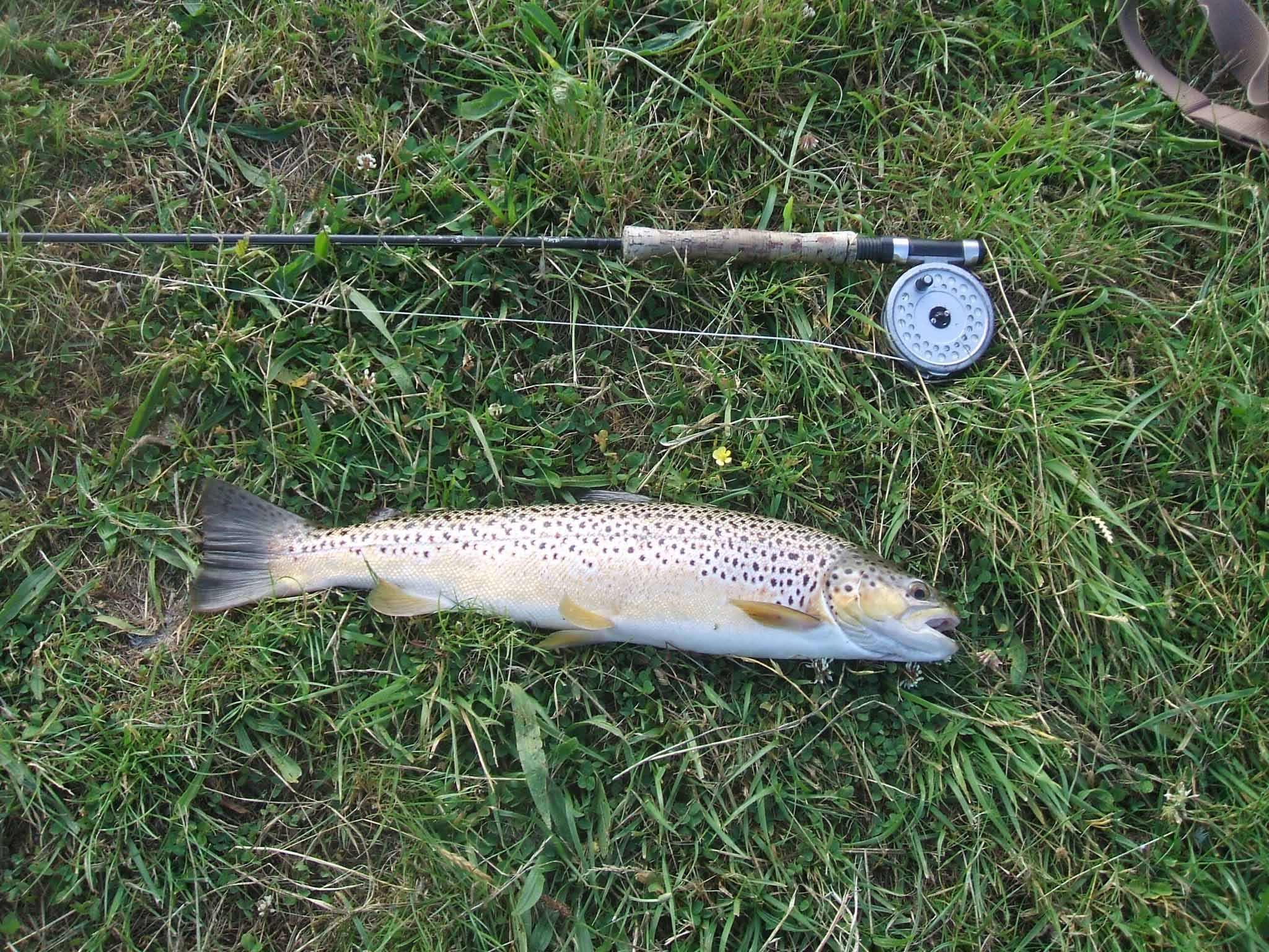 NRFFA - Fishing Reports